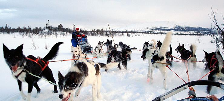 vinteraktivitet-hundespann